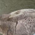 Petroglifos de Kiad